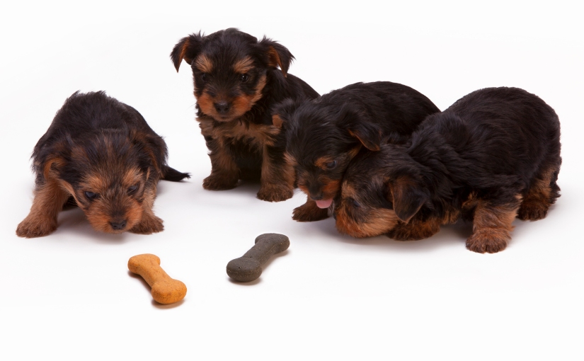 7 Things That You Should Be Prepared for a Puppy